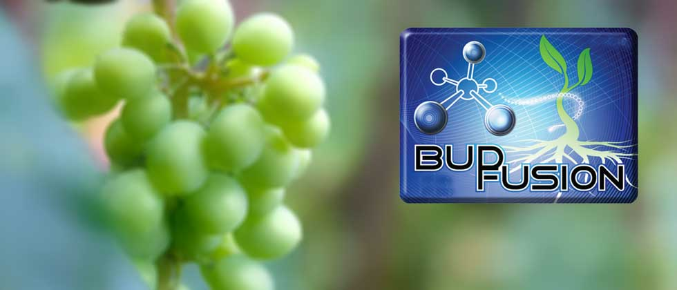 bud fusion banner